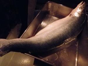 saumon-3